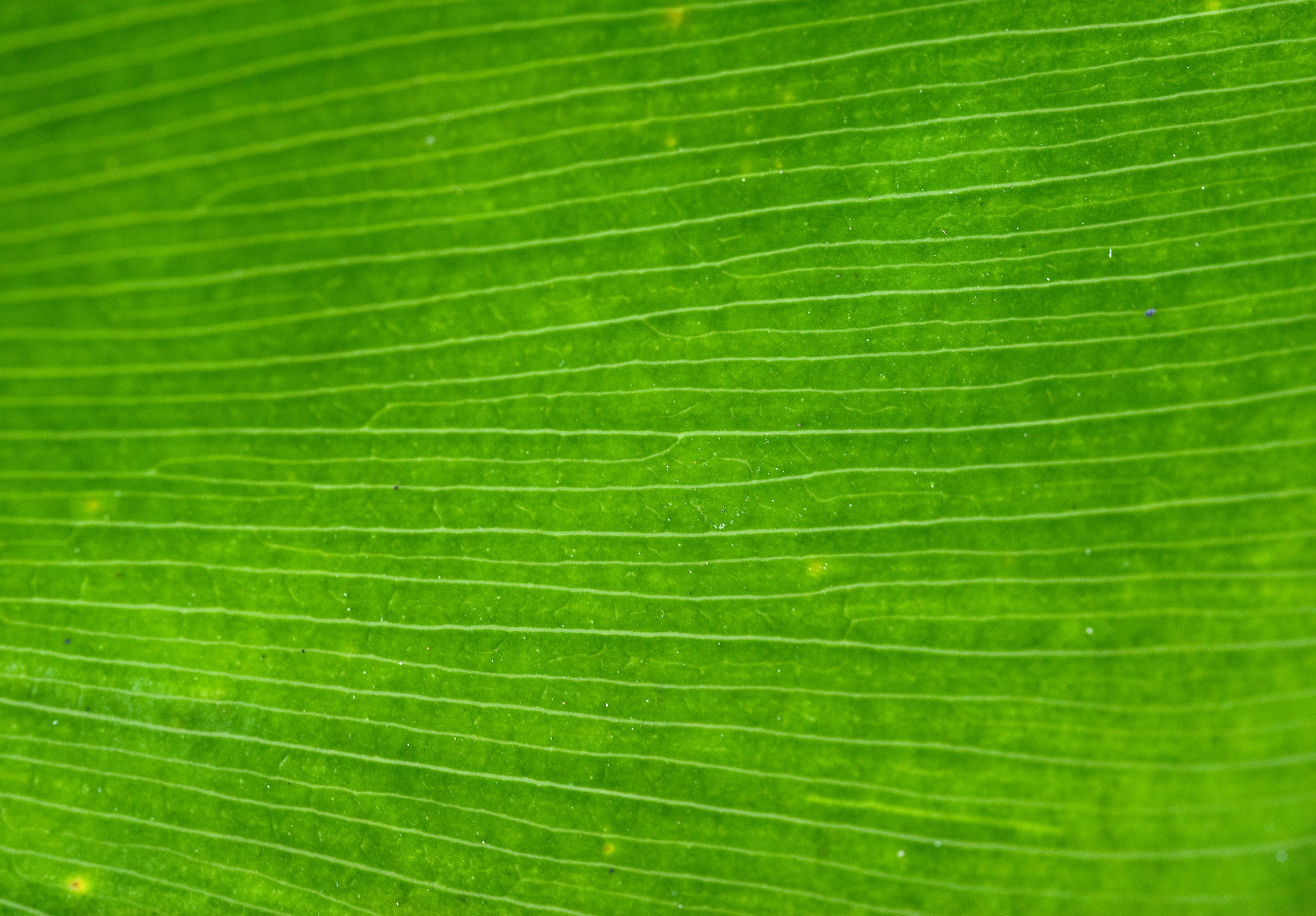 close up of green leaf background image